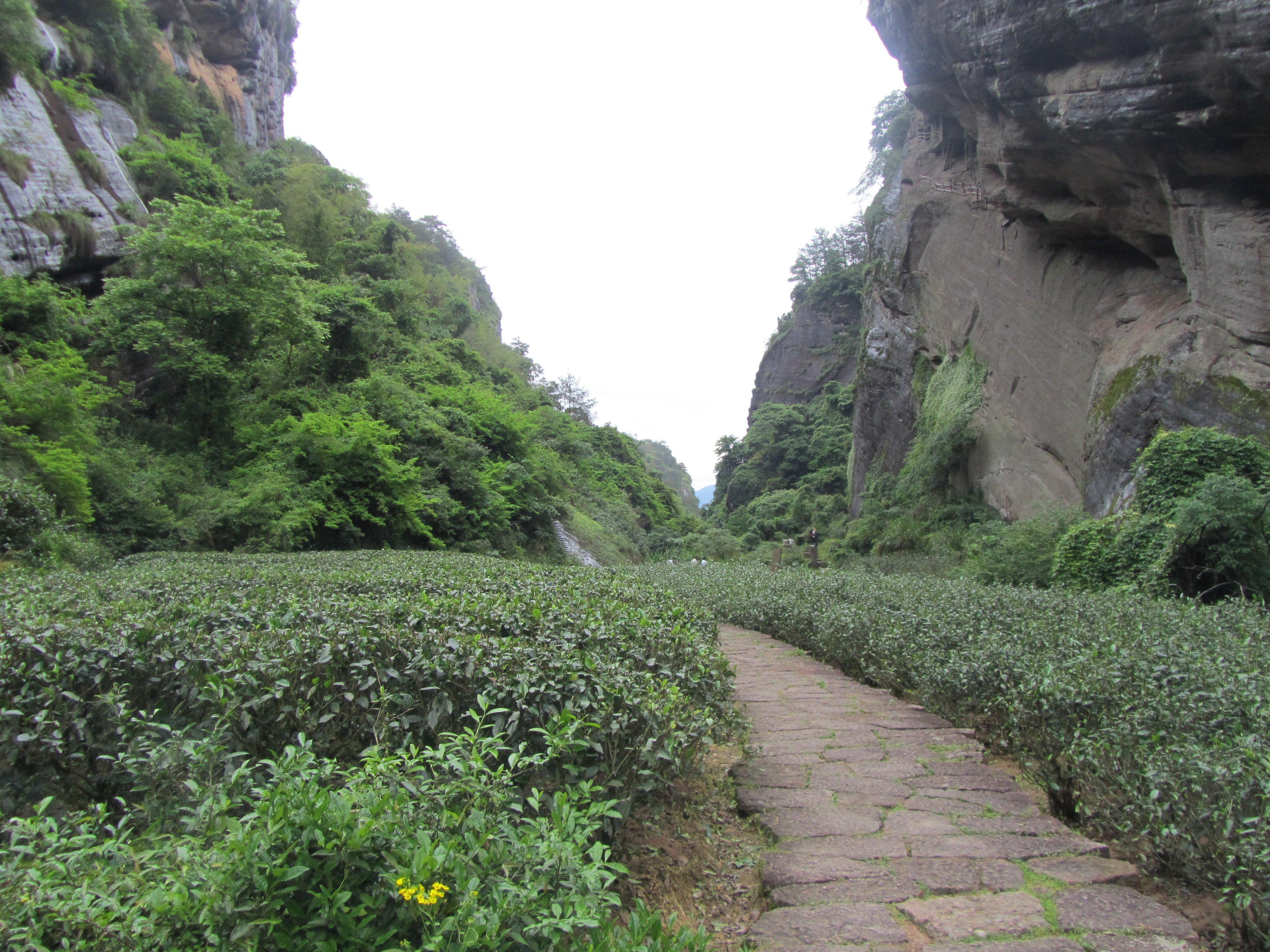 The Six Pillars of Cha Tao (The Way of Tea)