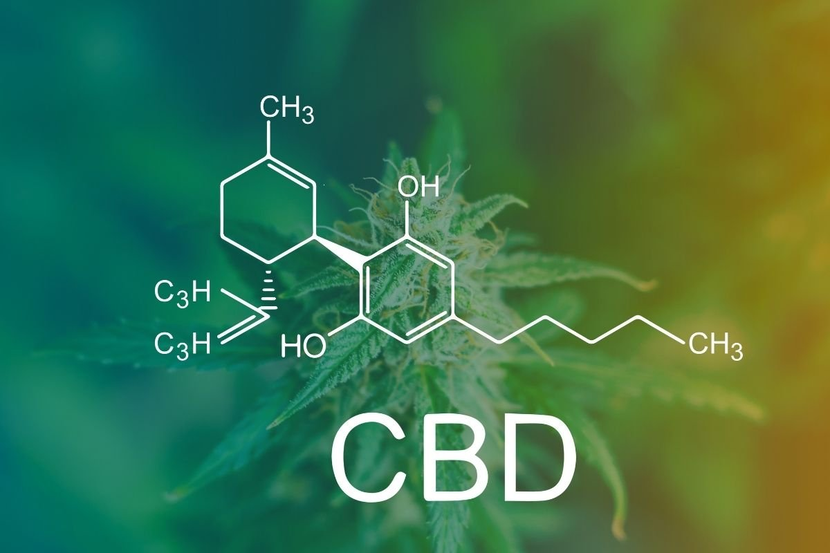 What is the Difference Between Hemp CBD and Cannabis CBD