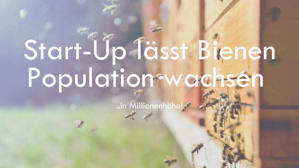 Bienenpopulation