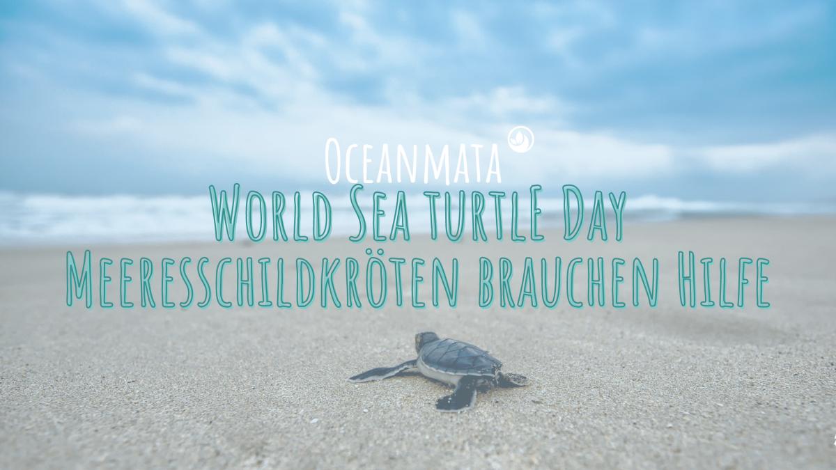 """""""World Sea Turtle Day"""" - Meeresschildkröten brauchen deine Hilfe!"""