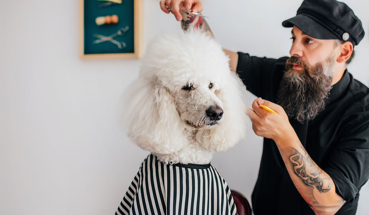 We Did Some Grooming: New SmartyPaws Chews for Dogs