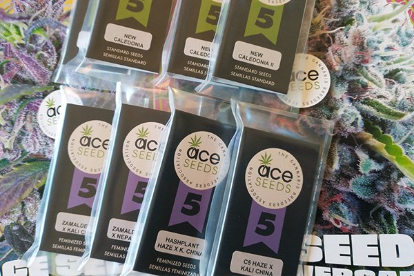 ACE Seeds - NEW Strains