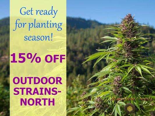 15% Discount Outdoor Strains-North