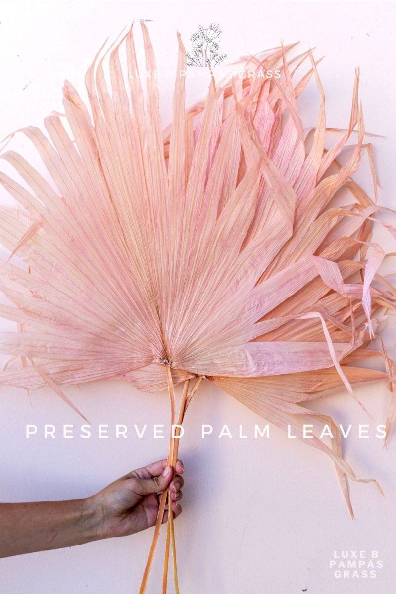 Luxe B Pampas Grass Perserved Palm Leaves