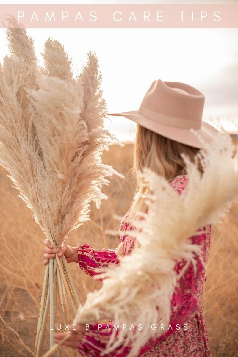 Pampas Grass Care Tips