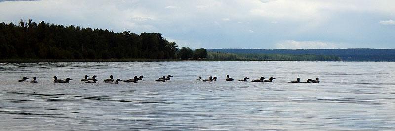 Ambassador Update - Campout at Buck Lake