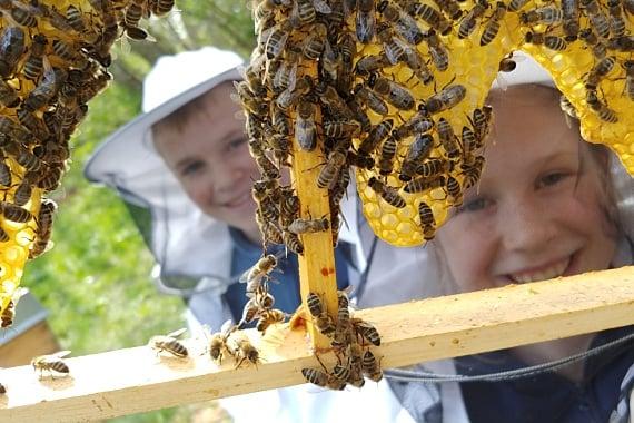 Kinder, Kinder - diese Bienen...!