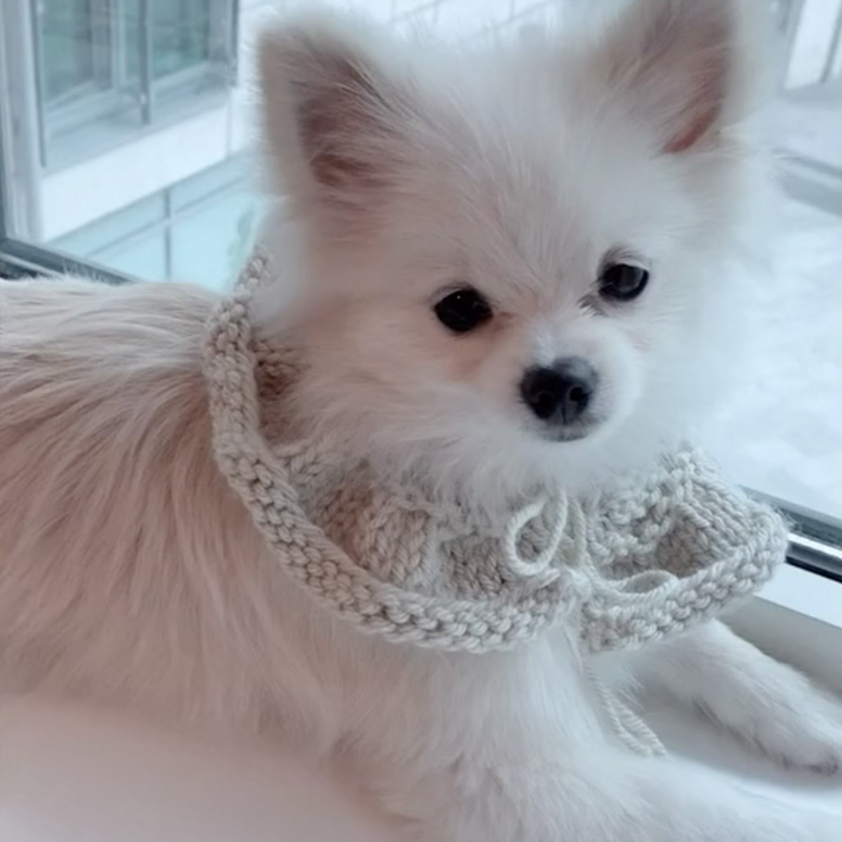 At Home with Wild & Gorgeous - Handmade Knit Collar