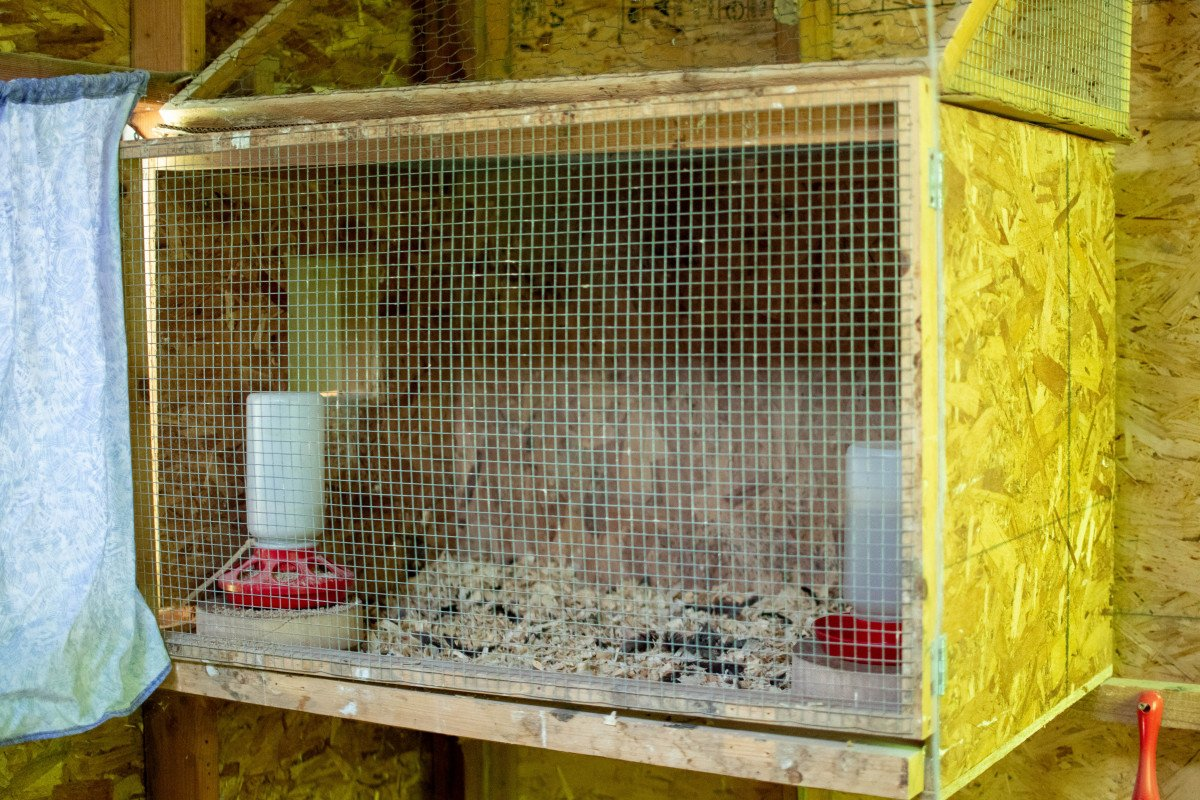 Closed off nesting boxes for chickens