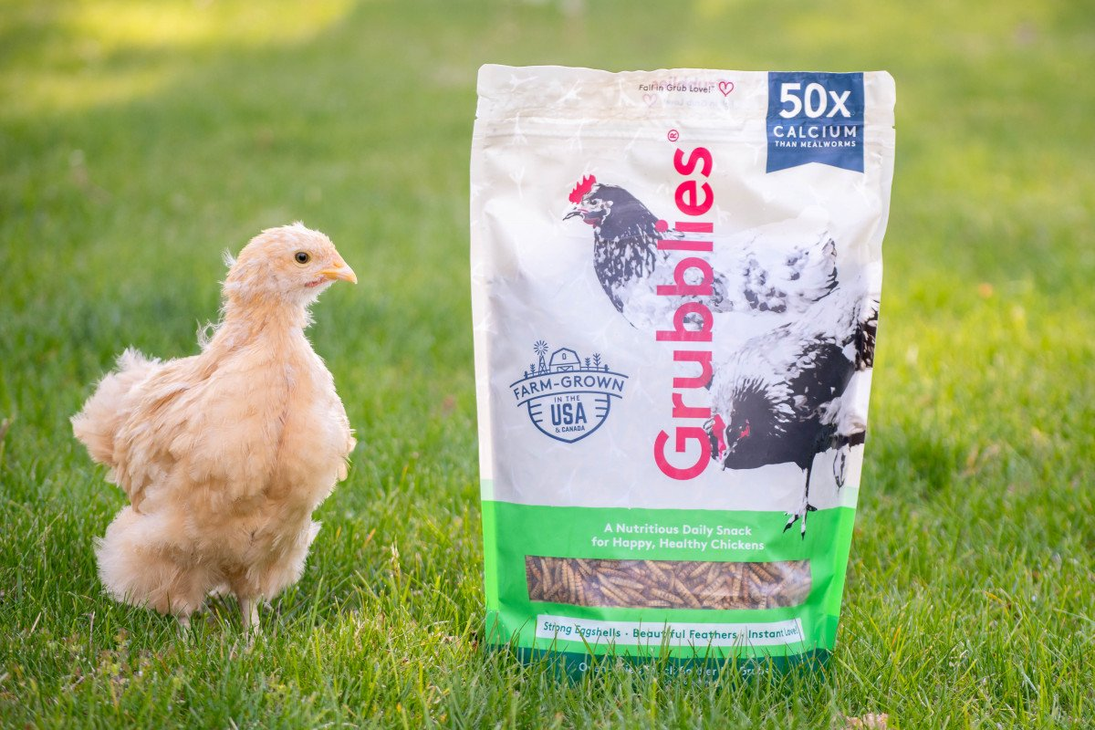 Chicken in grass standing next to bag of Grubblies