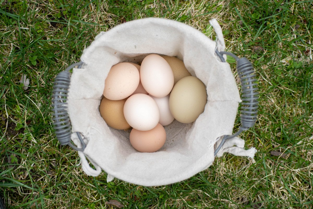 basket of eggs sitting in the grass