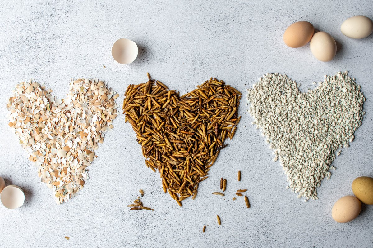 three options for supplemental calcium: grubblies, crushed eggshells, and crushed oyster shells.