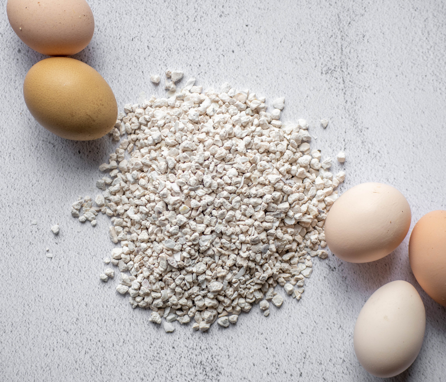 Hens Need Calcium - Here's How to Make Sure They Get Enough