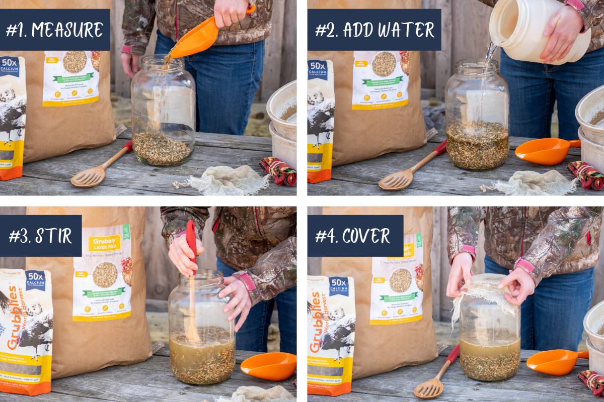 step by step infographic with 4 key steps to ferment the feed
