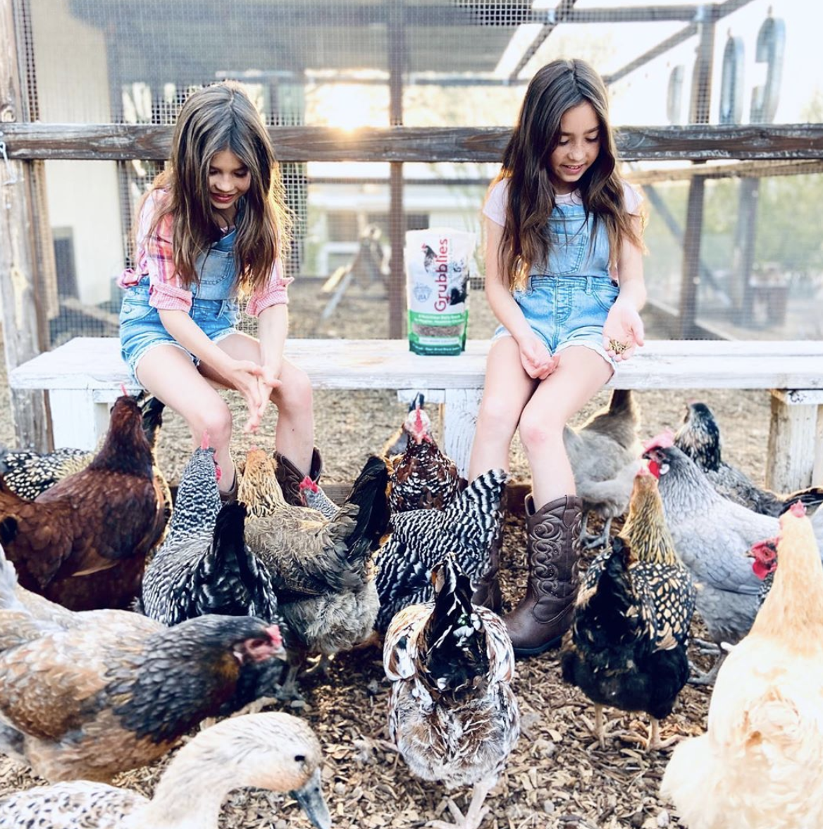 two girls feeding their chickens a grubblies snack