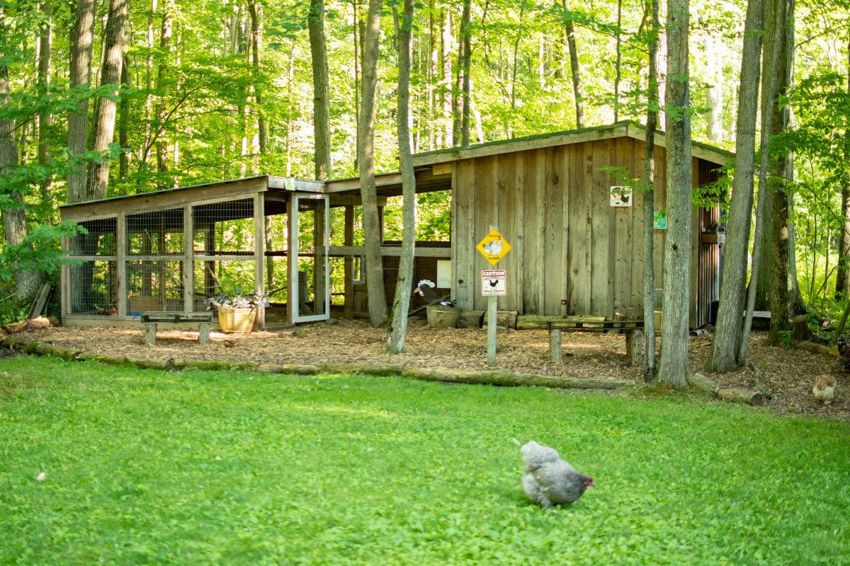 Example chicken coop