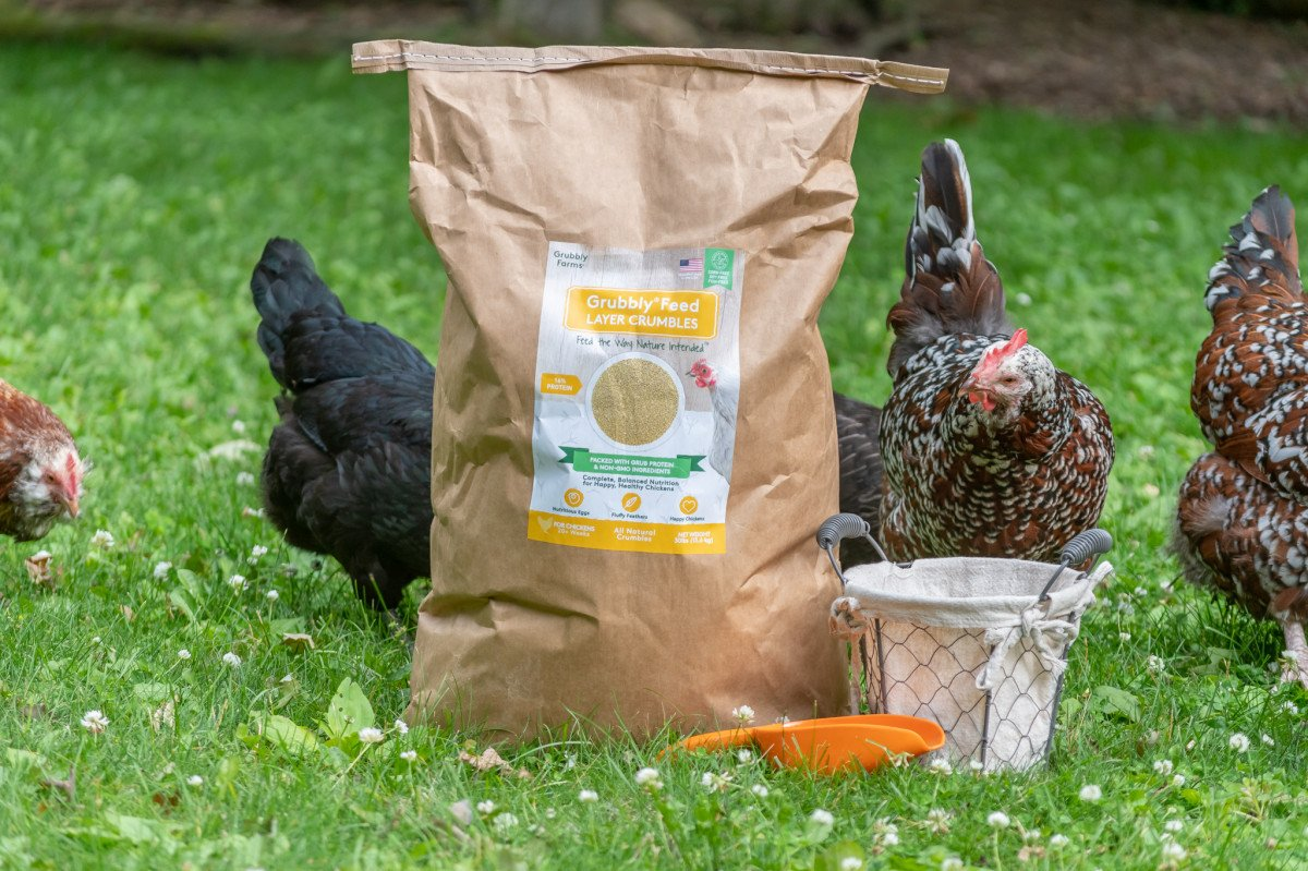 chickens free ranging in grass next to bag of layer feed