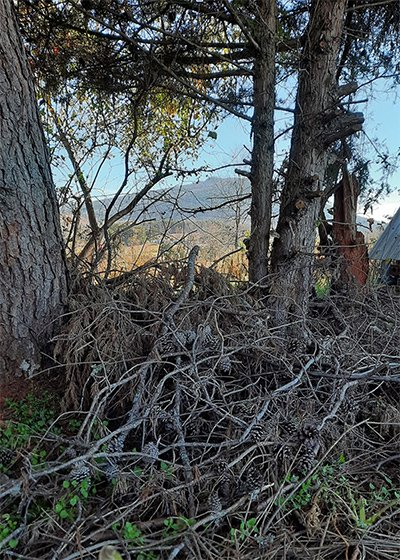 An image of the centermost brush pile along the top ridge of hemp hill.