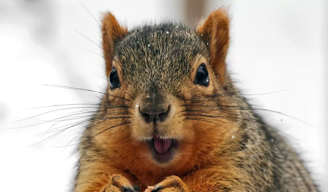 What we can learn about Carpet Cleaning Pricing from a Dead Squirrel