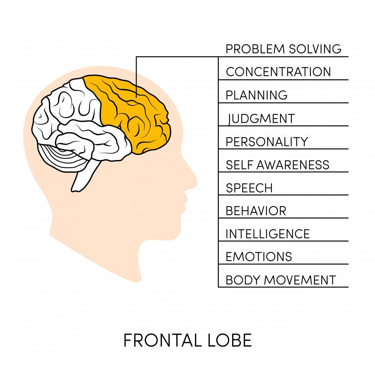executive function skill and autism frontal lobe