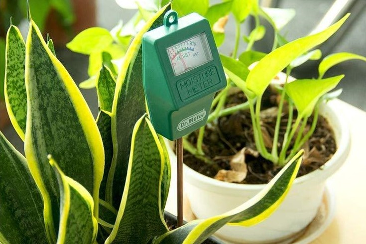a photo of a moisture meter in a house plant pot