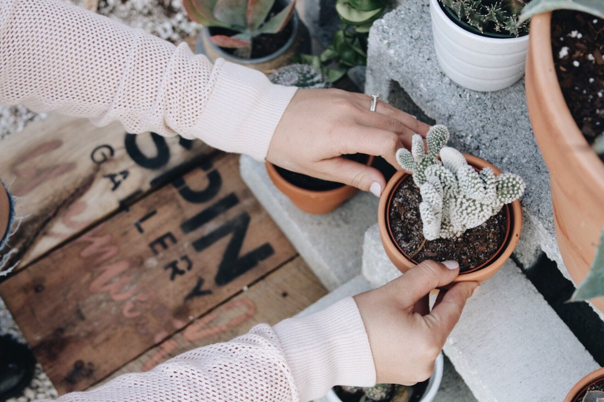 a photo of a person picking up a cactus in a terra cotta pot