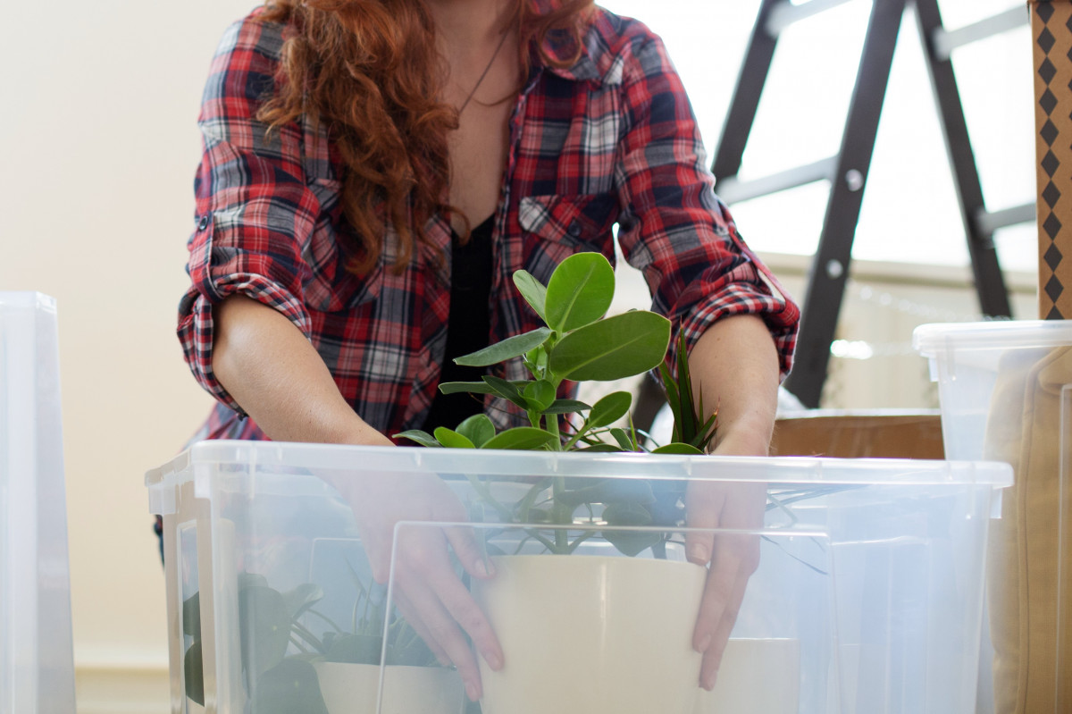 A person packing house plants into a plastic box