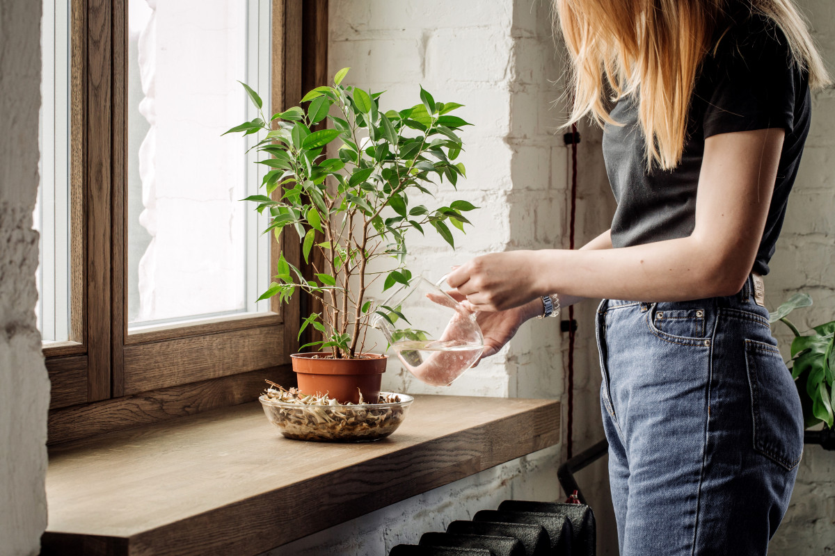 a photo of a person watering a house plant