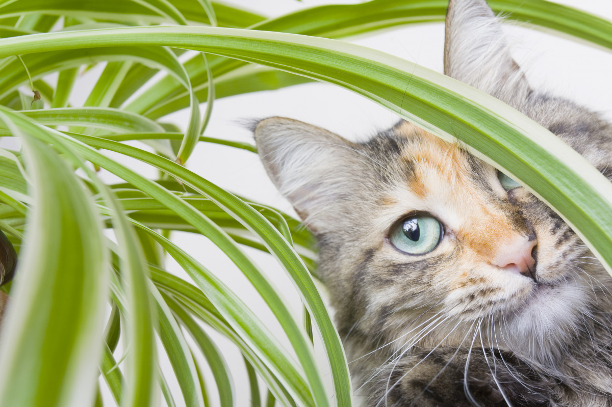 a photo of a cat with a spider plant