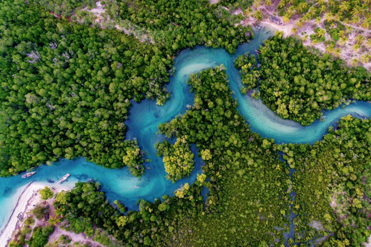 aerial view of mangrove coastal forest