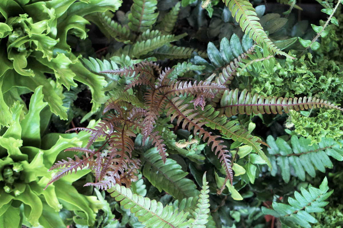 a photo of many different variety of ferns