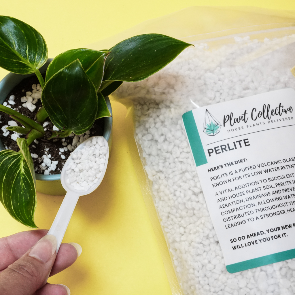 a photo of someone adding perlite to a potted house plant