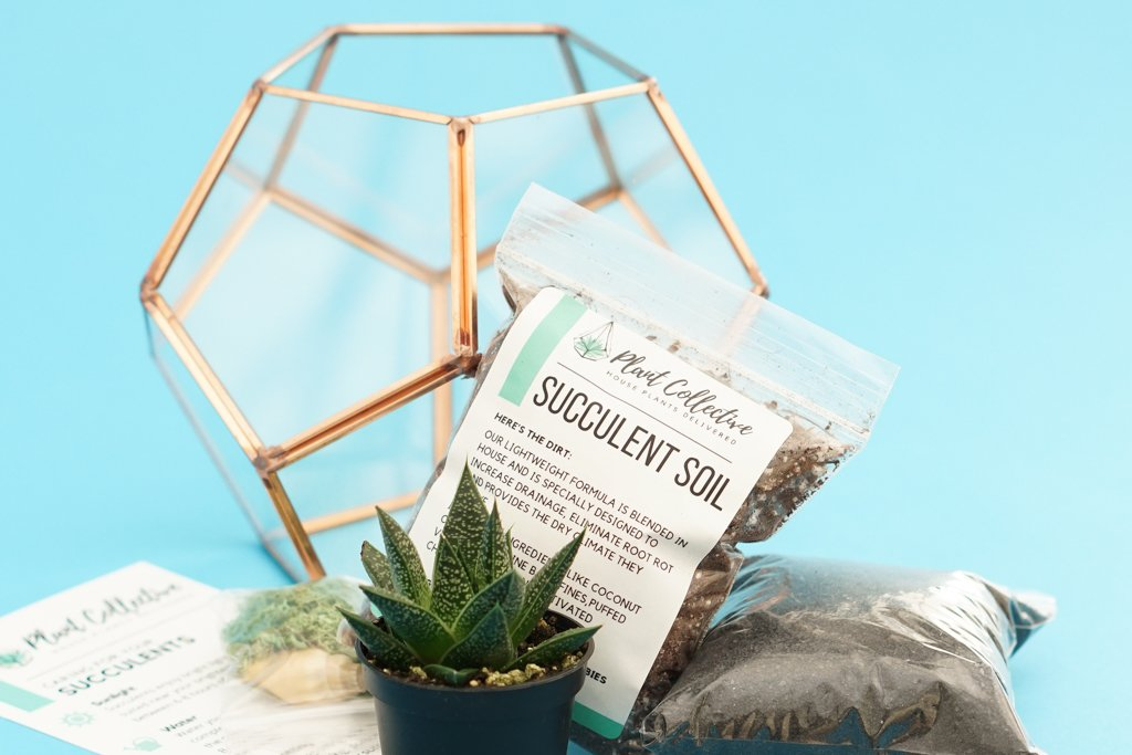 a photo of Plant Collective Succulent Soil displayed with a succulent terrarium kit