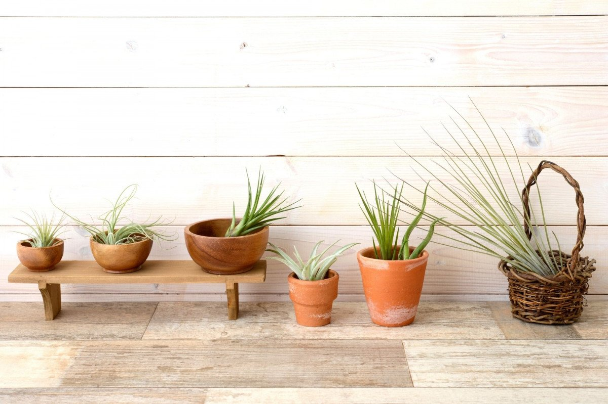 a group of air plants displayed in wooden bowls, tiny baskets, and tiny terra cotta pots