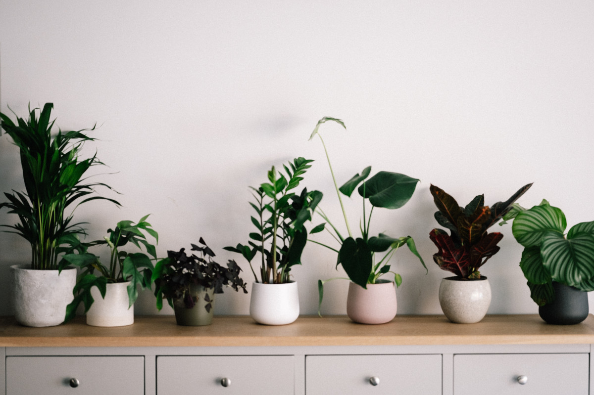 a number of house plants on a table