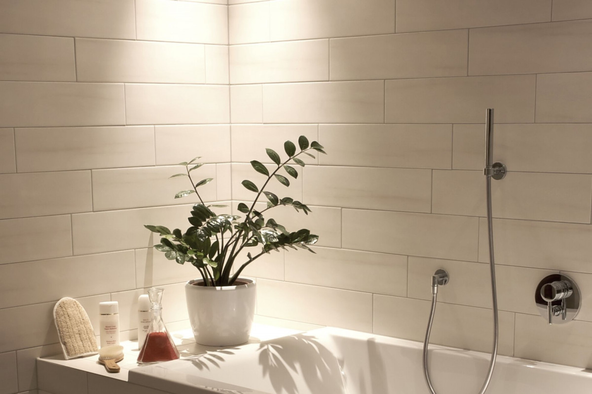 a photo of a ZZ Plant in a dimly lit corner of a bathroom