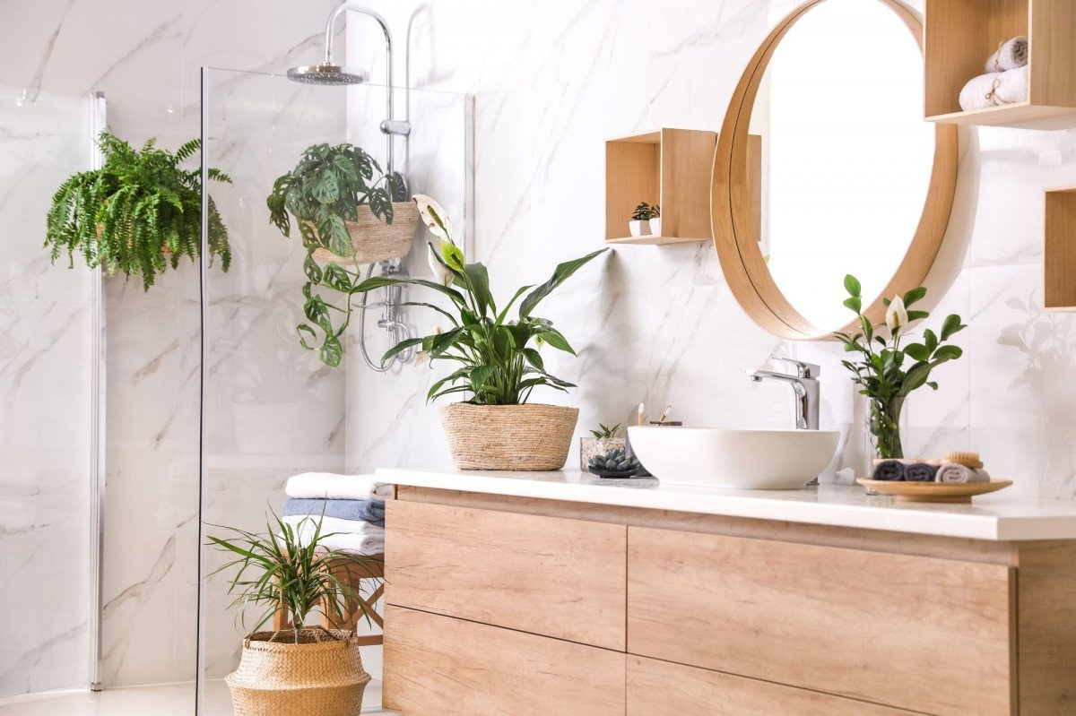 a photo of house plants in a bright bathroom