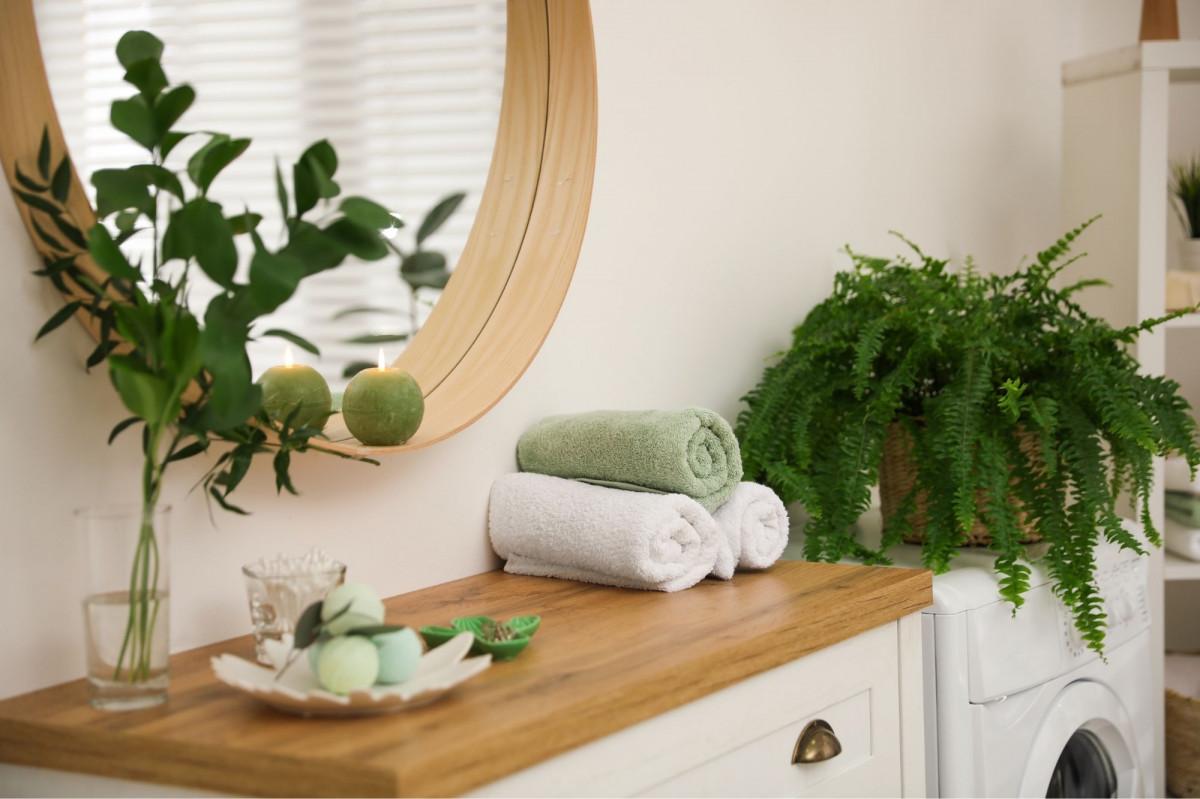 a photo of a fern on a bathroom counter