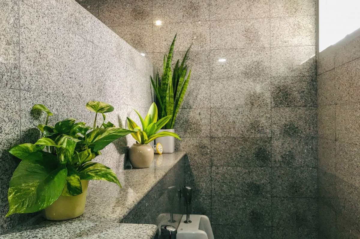 A photo of house plants in a low light bathroom