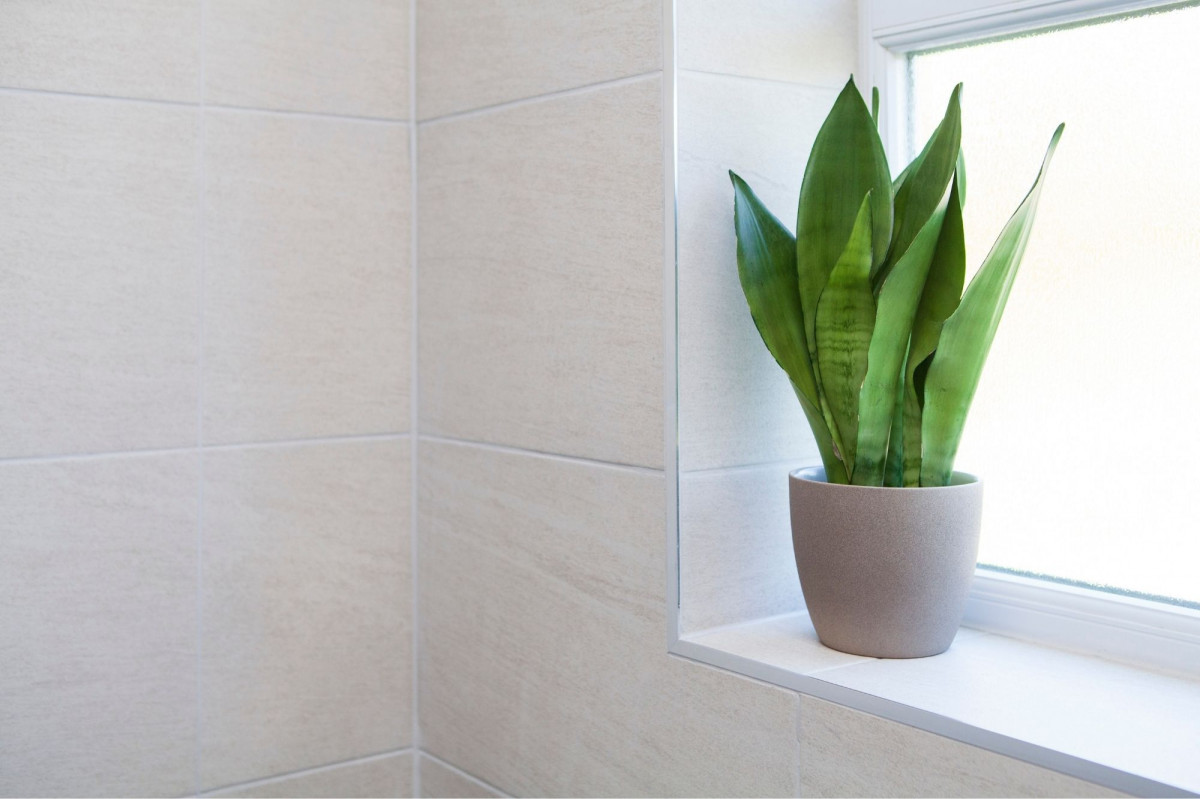a photo of a snake plant in an eastern facing window of a bathroom