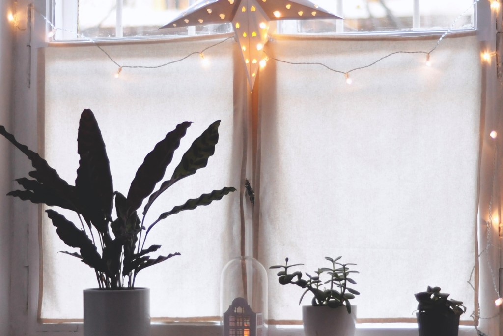 three should plants sitting in the windowsill with white christmas lights