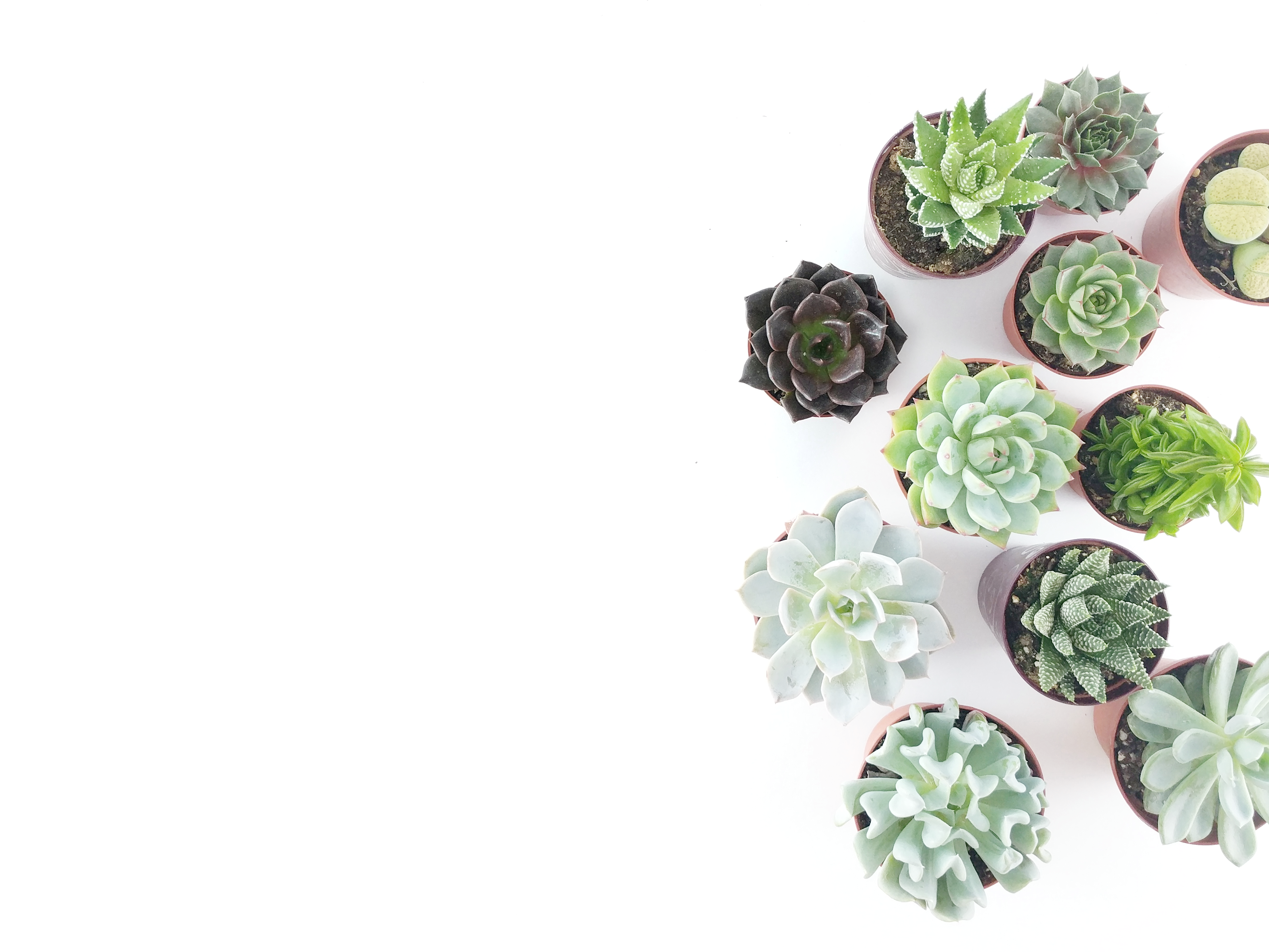 What Are Succulents?