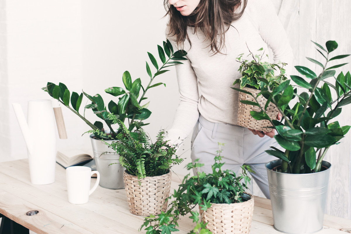 10 Most Common Mistakes That New Plant Parents Make