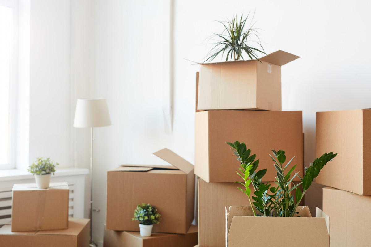 How Do I Pack My House Plants For Moving?