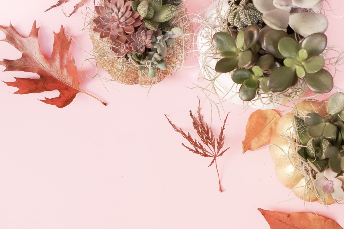 DIY Succulent & Moss Pumpkin