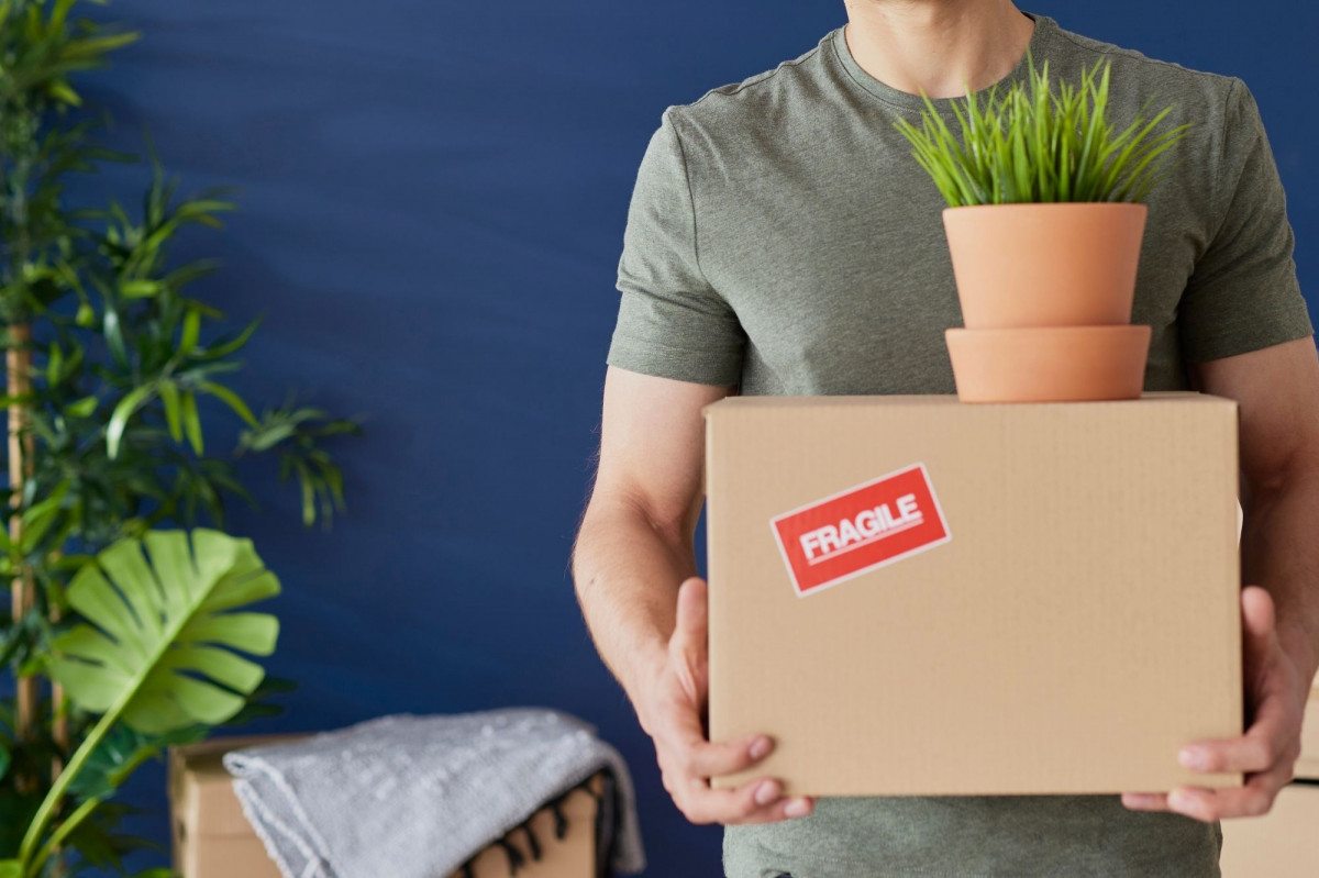 What To Do When You've Received New Plants