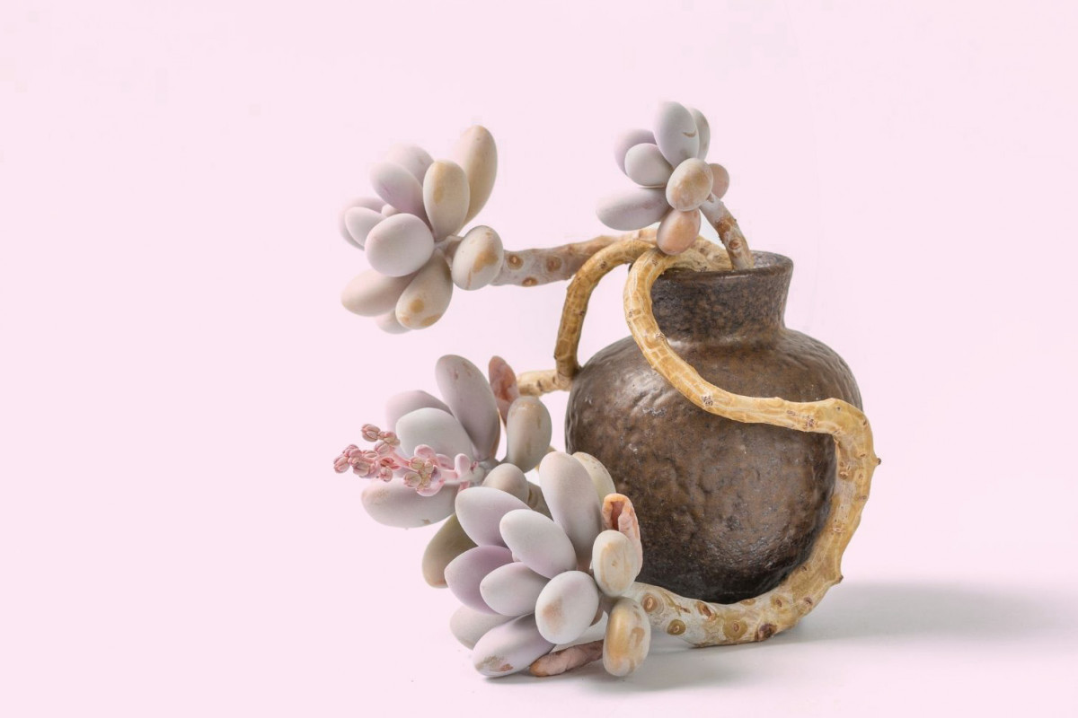 What is Farina on Succulents?