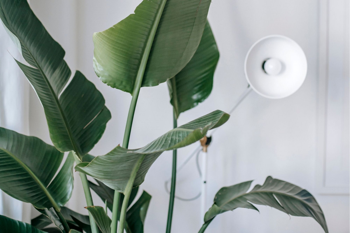 How to Use Grow Lights for House Plants