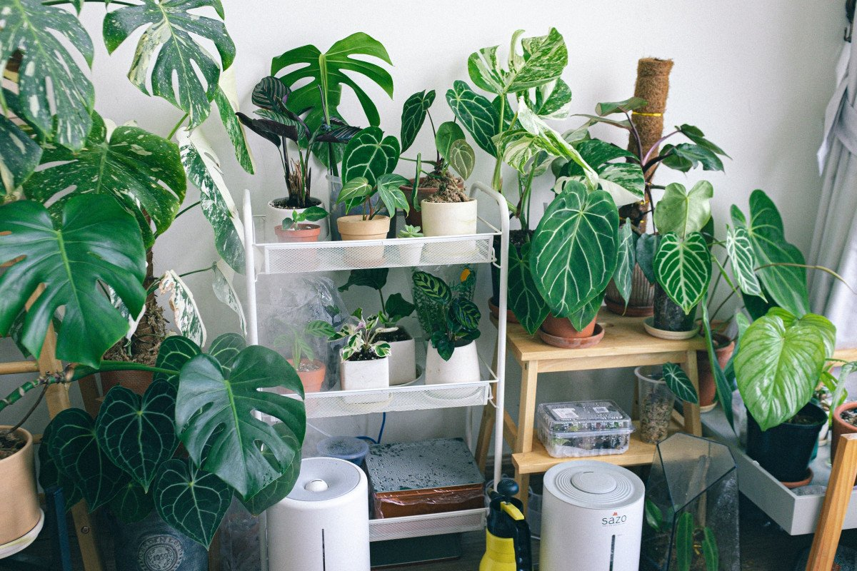 3 Effective Ways to Increase Humidity for Your House Plants