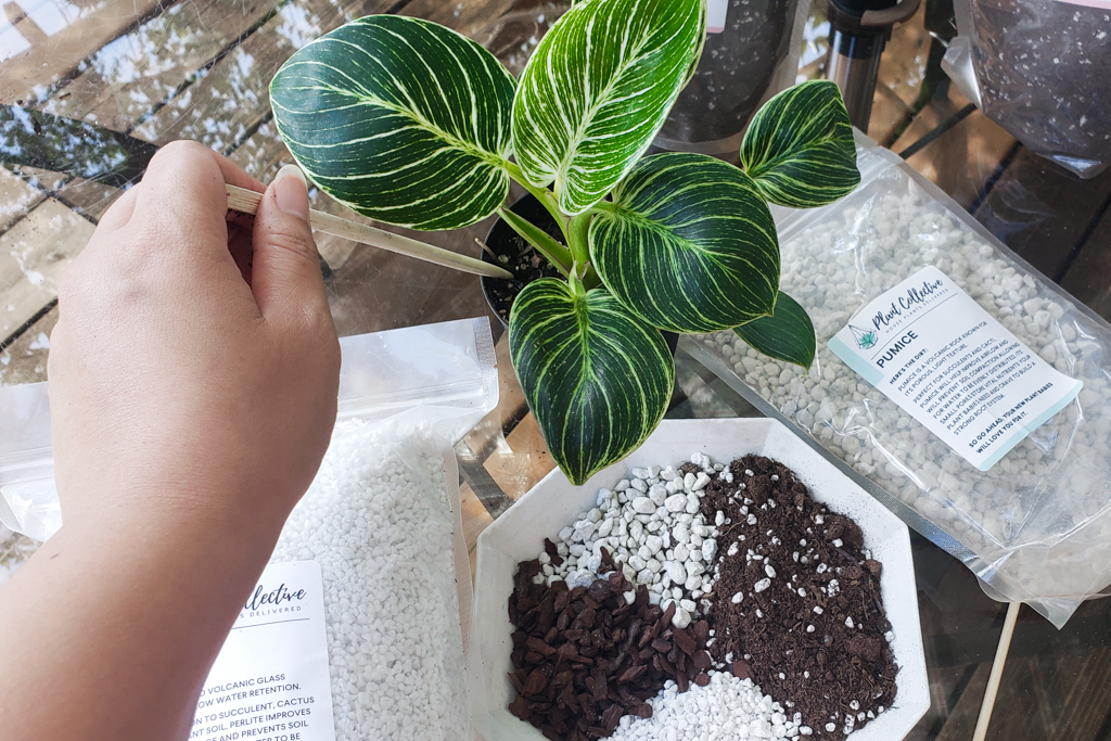 How To Aerate Your House Plant Soil